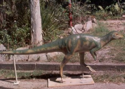 A model of the Muttaburrasaurus.