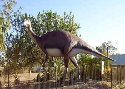 A model of the Muttaburrasaurus Langdoni
