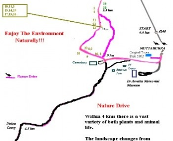 Map of Nature Drive with an indication of where the numbered trees are.